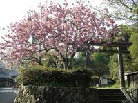 勝手神社1