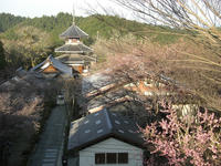 吉野山2010
