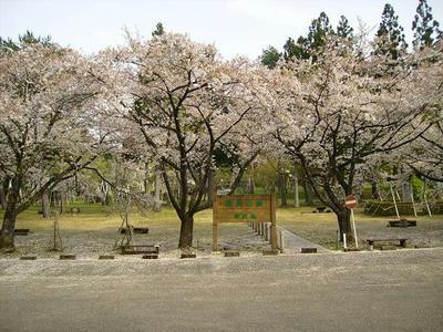 20080501kenmin_sakura.JPG