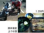 うなぎ 大衆食堂 橋本食堂<<<ブログ