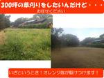 草刈・草取・お庭の手入れの風景