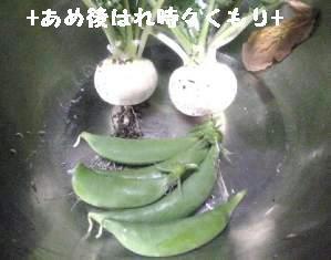 6晩御飯2