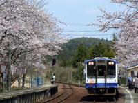 sakuraeki110415-2nj.jpg
