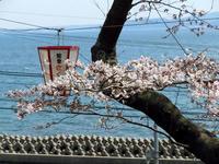 sakuraeki110415-3nj.jpg