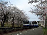 sakuraeki110415-7nj.jpg