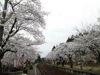 sakuraeki110418-1nj.jpg