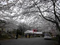 sakuraeki110418-2nj.jpg
