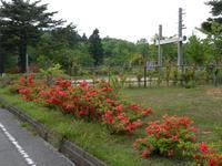 wakuranosato110520-4nj.jpg