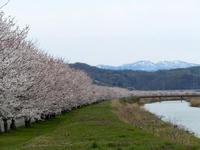 sakuraeki-5nj.jpg