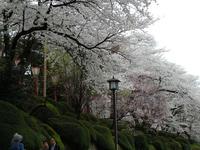 sakuraeki-6nj.jpg