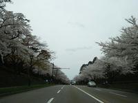 sakuraeki-7nj.jpg