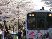 sakuraeki120427-2nj.jpg