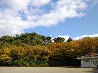 kouyou-4nj.jpg