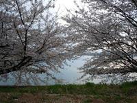 notojima-sakura-1nj.jpg