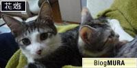 にほんブログ村 猫ブログへ