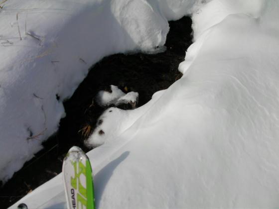 1554 雪が融けて川になって流れてゆきます~♪
