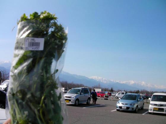 1458 並柳交差点回避の近道から大王農場を見たらワサビの花が咲いていたので、サンモリッツに寄ってみたら買えた!@200×2。春の味覚を味わえた。例年なら3月末にはもう無い。やはり寒い春先
