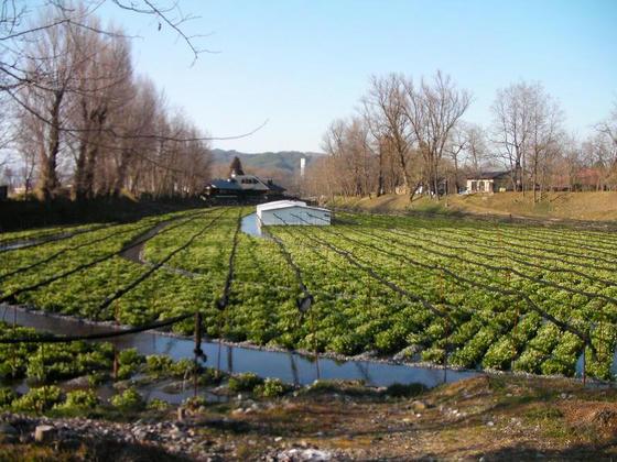 1616 大王農場のわさび田