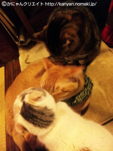 仲良し3猫毛繕い