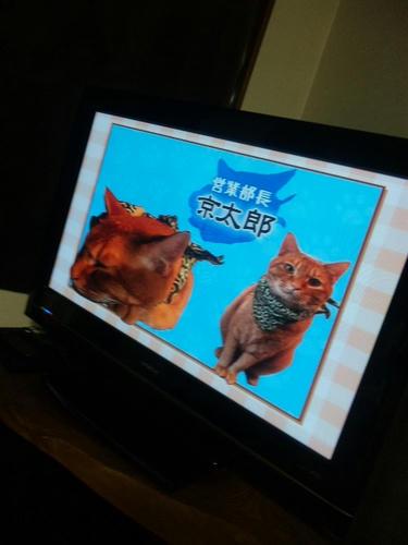 営業部長 京太郎TV紹介