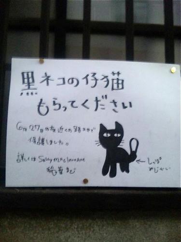 黒猫貰って下さい