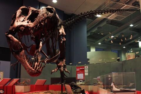 完全版STAN-ティラノサウルス全身骨格
