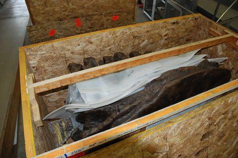 ティラノサウルス STAN 木箱1