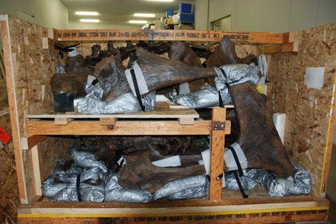 ティラノサウルス STAN 木箱3