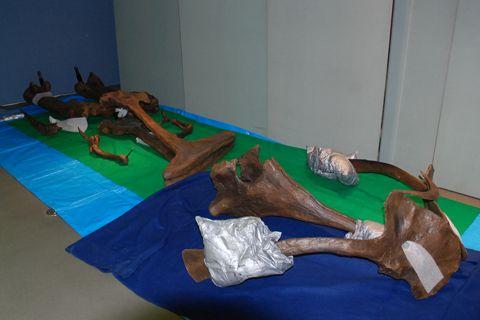ティラノサウルス STAN パーツ1