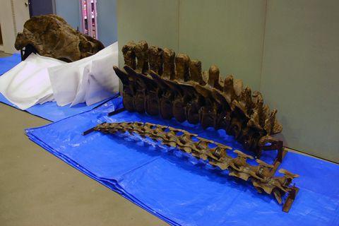 ティラノサウルス STAN パーツ3