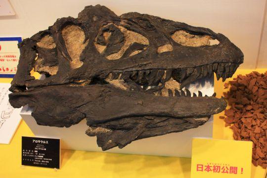 佐賀県立宇宙科学館『恐竜展2』その4