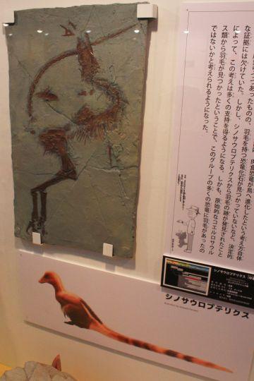 佐賀県立宇宙科学館『恐竜展2』その5