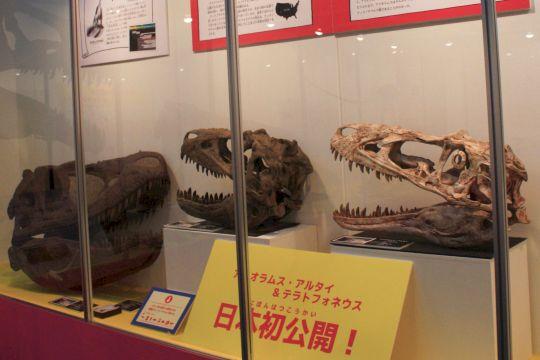 アリオラムス、テラトフォネウス、ダスプレトサウルス