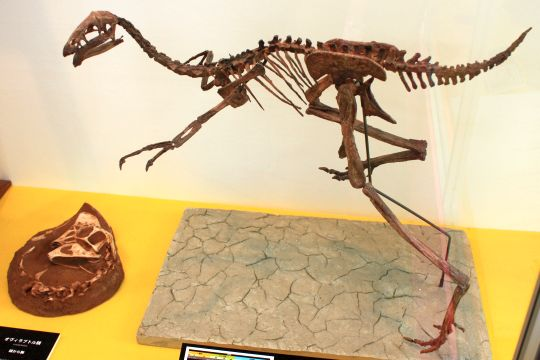 佐賀県立宇宙科学館『恐竜展2』その7
