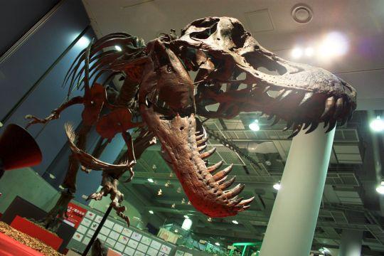 ティラノサウルス その3