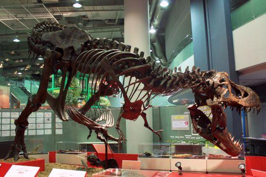 ティラノサウルス その4