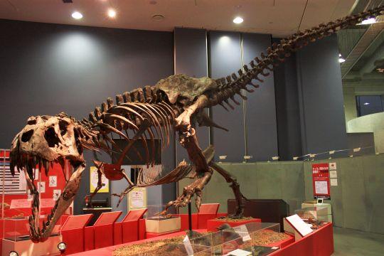 ティラノサウルス その5