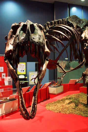 ティラノサウルス その7