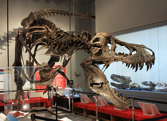 特別展『ティラノサウルス‐肉食恐竜の世界‐』 パーフェクト・スタン