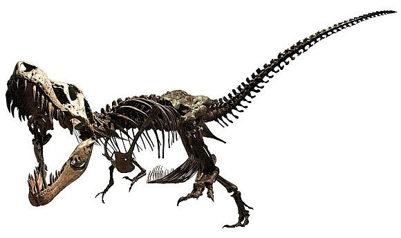 ティラノサウルス最新・完全版全身骨格