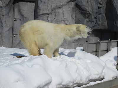 旭山動物園は寒い
