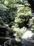 鴎外荘のお庭