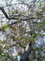 2009年の桜04