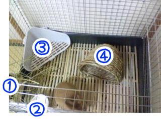 cage_ue.jpg