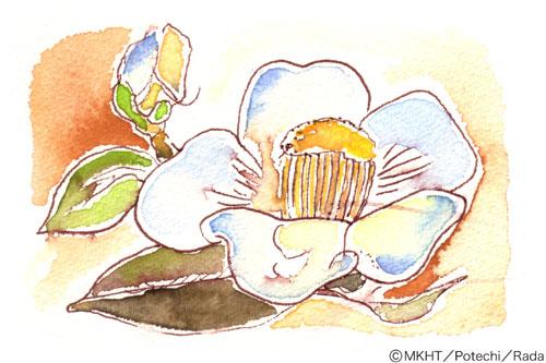 http://file.tanakaharuo.blog.shinobi.jp/0001.jpg