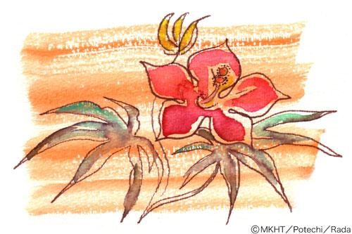 http://file.tanakaharuo.blog.shinobi.jp/0007.jpg