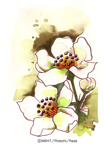 http://file.tanakaharuo.blog.shinobi.jp/0127.jpg