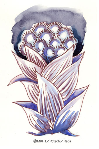 http://file.tanakaharuo.blog.shinobi.jp/0125.jpg