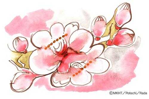 http://file.tanakaharuo.blog.shinobi.jp/0135.jpg