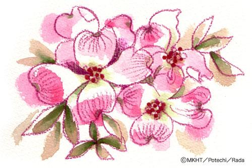 http://file.tanakaharuo.blog.shinobi.jp/0161.jpg